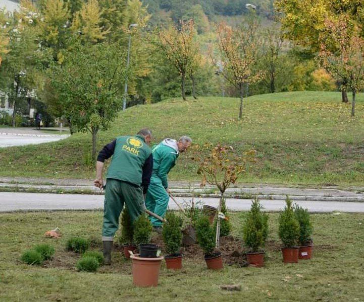 Park sadi stabla, živu ogradu i ukrasno grmlje u tri ulice u Novom Gradu